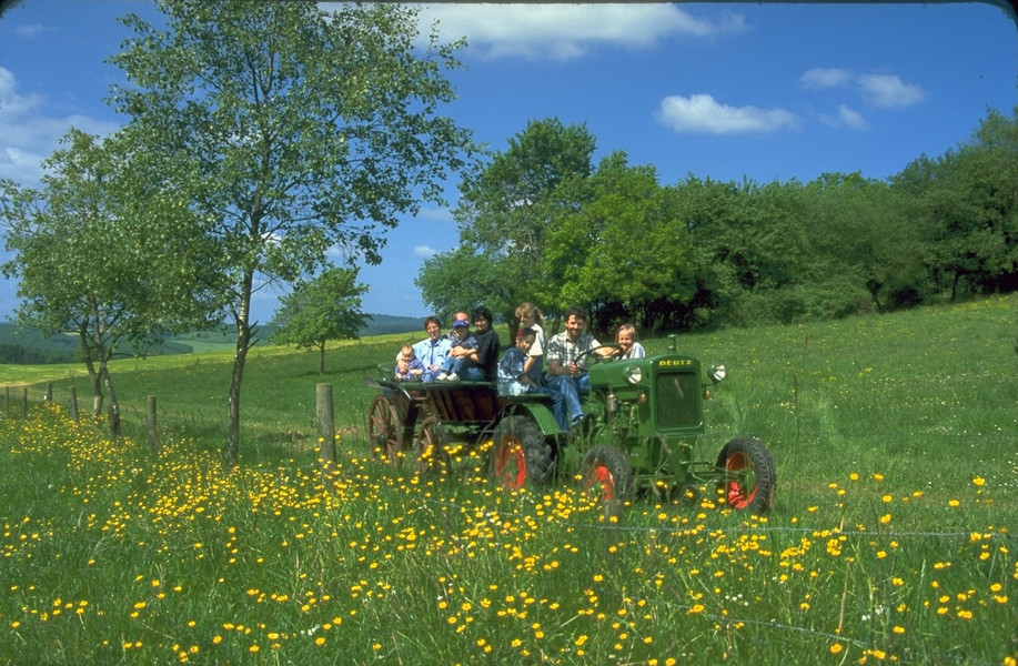 Kirschbaum Und Huhnerstall Tipps Fur Den Lieblingsbauernhof